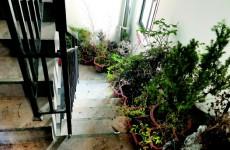 楼道内养花草和鸽子 海泊雅苑邻居遭殃